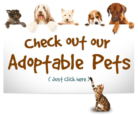 adoptable animals